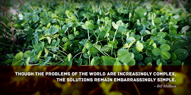 Clover lawn - Though the problems of the world are increasingly complex, the solutions remain embarrassingly simple.
