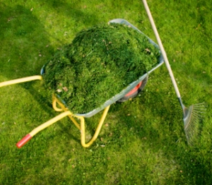 Grass Cuttings in Wheel Barrow