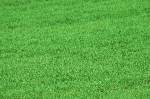 Plain grass lawn