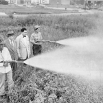 photo-chicago-2800-devon-ave-weed-spraying-two-city-officials-watching-thats-likely-ddt-1952