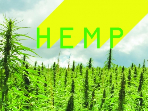 Feature Hemp Valhalla