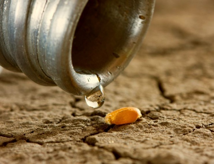 One drop on wheat corn and dry land