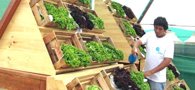 billboard grows food for town for free
