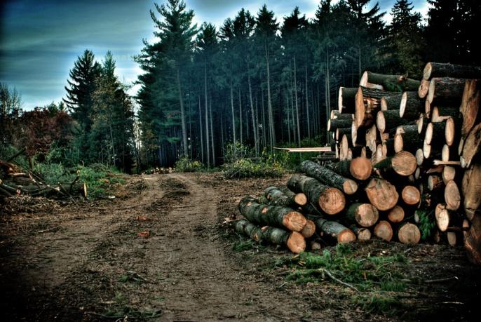 Jesse Jay Deforestation Future Food Logs Cut Rainforest Pine