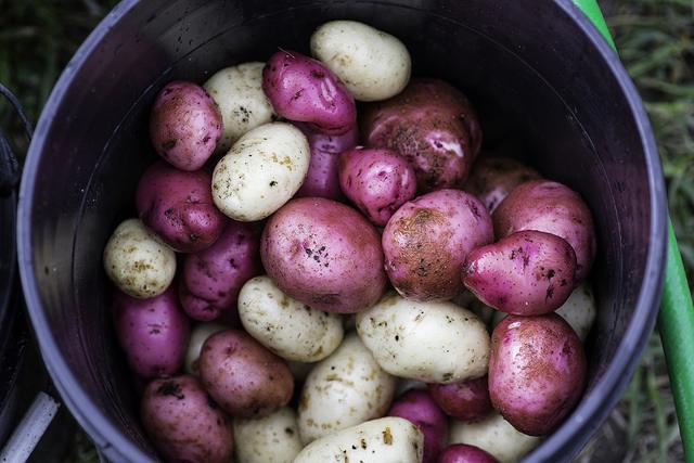 Lawrence Potato ORganic Photography HiRes